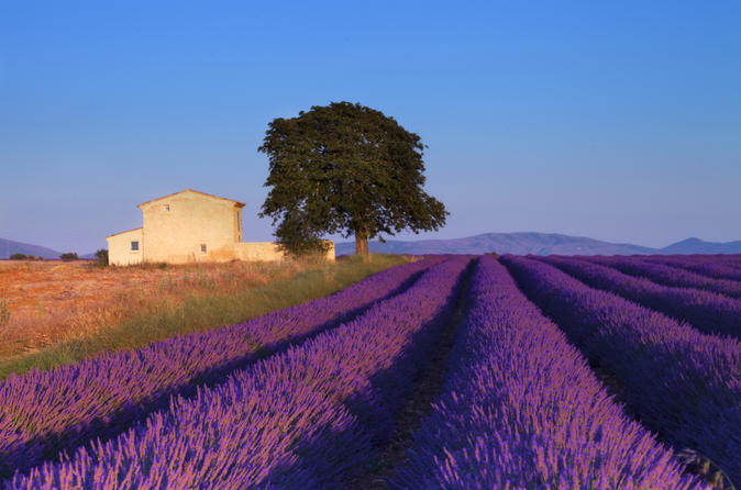 provence-lavender-fields-tour-from-aix-en-provence-in-aix-en-provence-131983